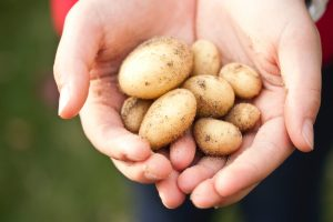 A handful of potatoes