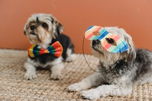 dogs in bow ties and masks